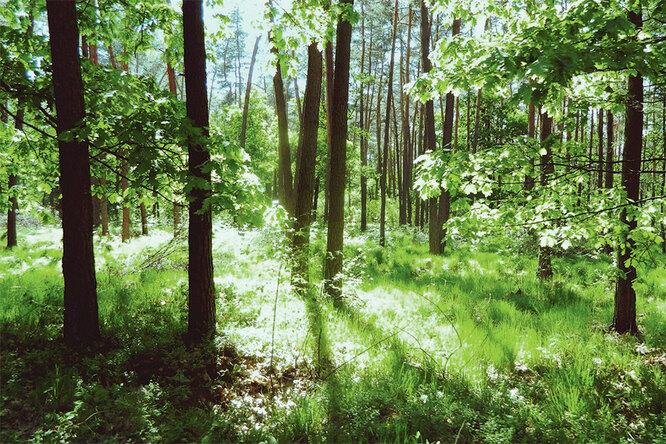 Швеция считается одной из самых экологически чистых стран