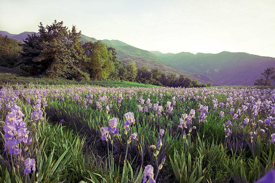 Растения длясредств Weleda собирают повсему миру – отАргентины доНовой Зеландии