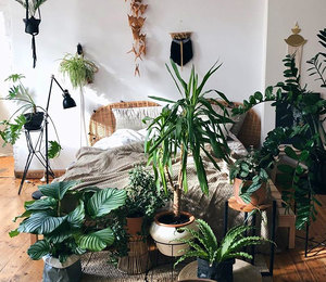 Какие растения поставить вспальне, чтобы они принесли пользу вашему здоровью