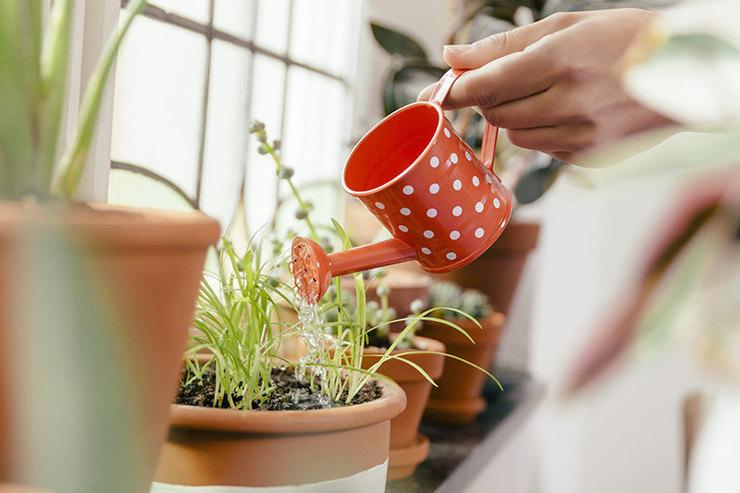 8 растений, которые будут расточать повашему дому неповторимый аромат